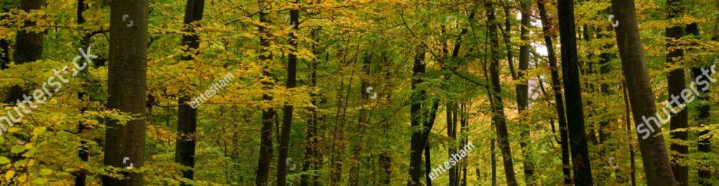 Photo de sous-bois, chasse Cartouches Sologne